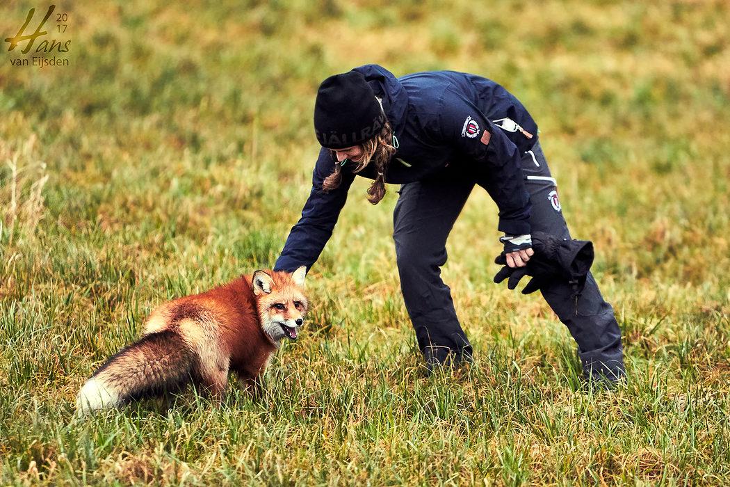 Ayla The Fox (HvE-20161229-0344)