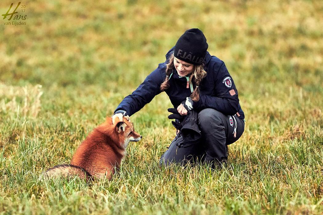 Ayla The Fox (HvE-20161229-0351)