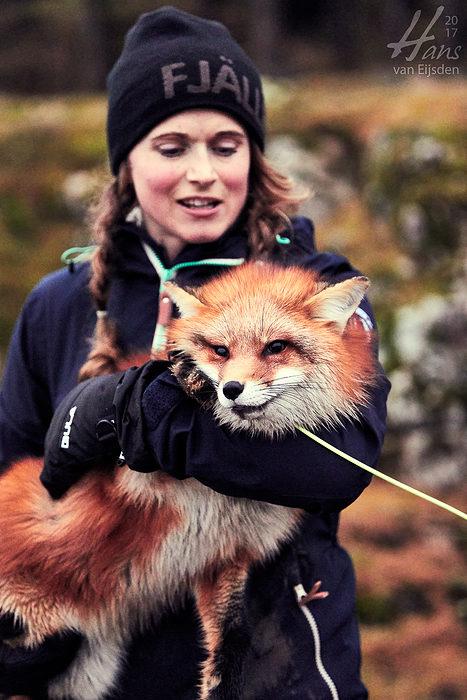 Ayla The Fox (HvE-20161229-0522)