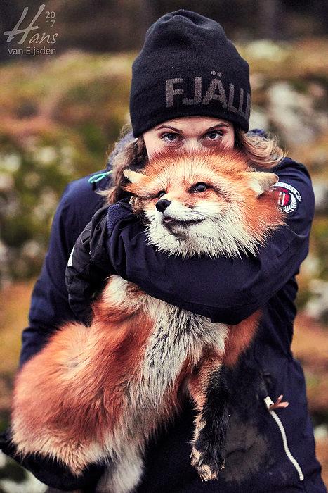 Ayla The Fox (HvE-20161229-0523)