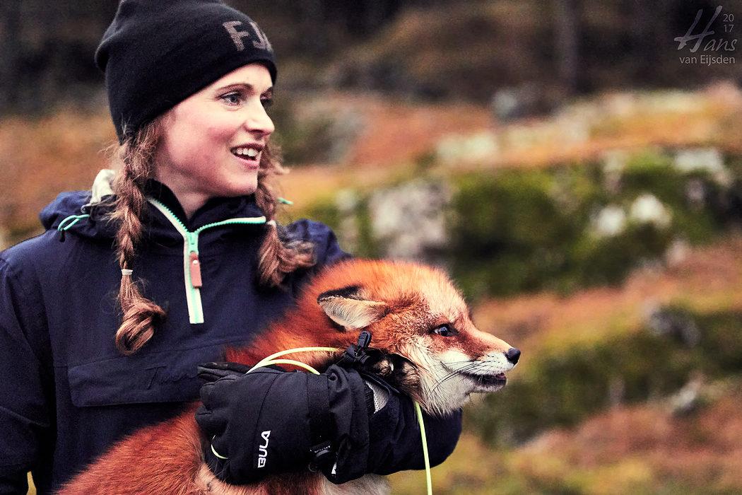 Ayla The Fox (HvE-20161229-0535)