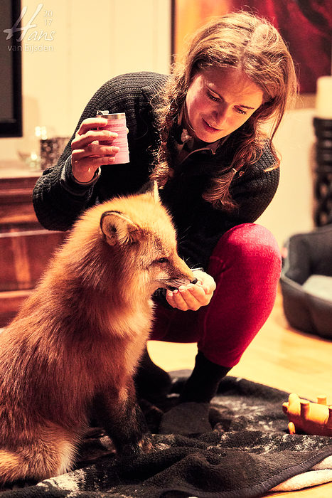 Ayla The Fox (HvE-20161229-0561)